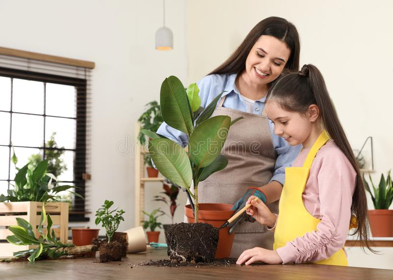 Mother and daughter taking care of plant. At home stock photography