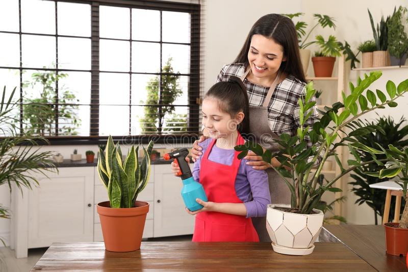 Mother and daughter taking care of plant. At home stock image