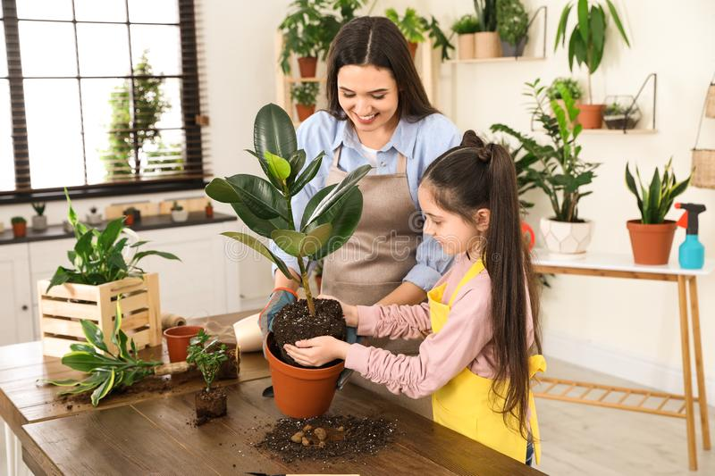 Mother and daughter taking care of plant. At home stock photos
