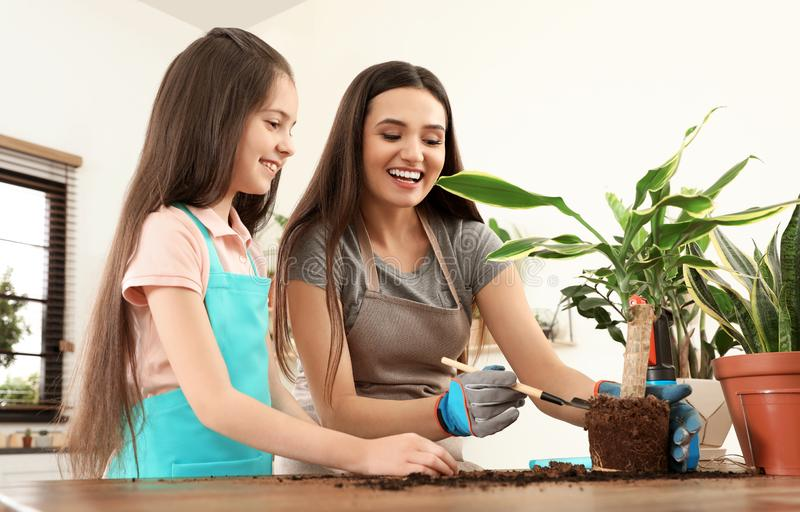 Mother and daughter taking care of plant. At home royalty free stock photo