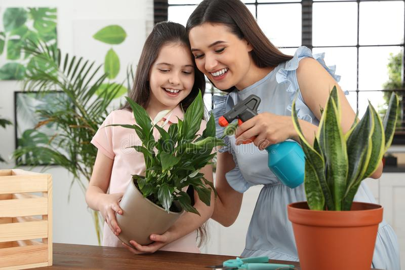 Mother and daughter taking care of plant. At home royalty free stock photography
