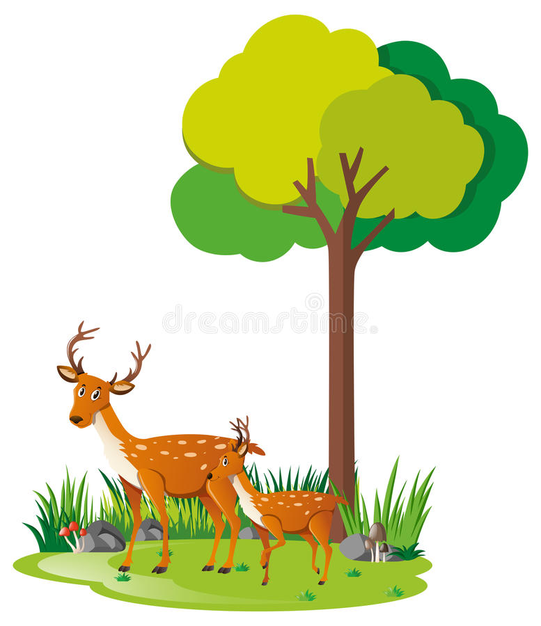 Mother deer and little fawn in forest vector illustration