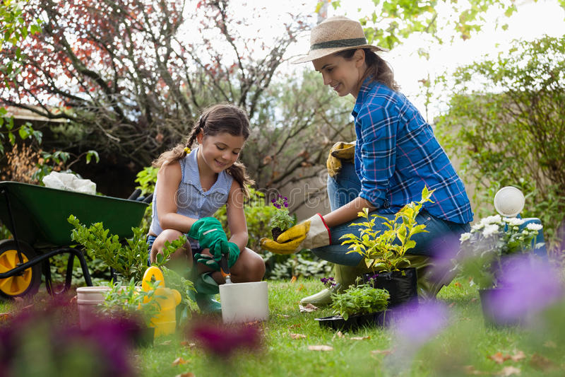 Mother giving seedling to daughter while gardening stock photography