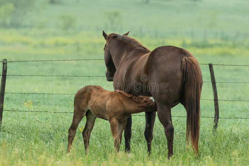 Mother and her newborn royalty free stock image