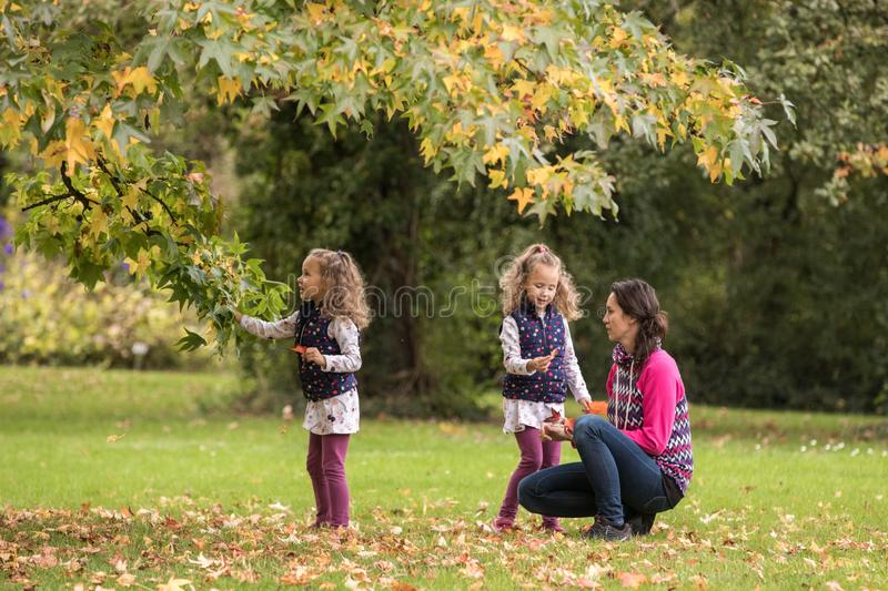 Mother and identical twins having fun under tree with autumn leaves in the park, blond cute curly girls, happy family, beautiful royalty free stock image