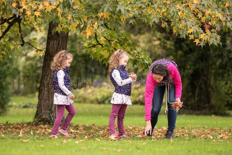 Mother and identical twins having fun under tree with autumn leaves in the park, blond cute curly girls, happy family, beautiful g stock photography