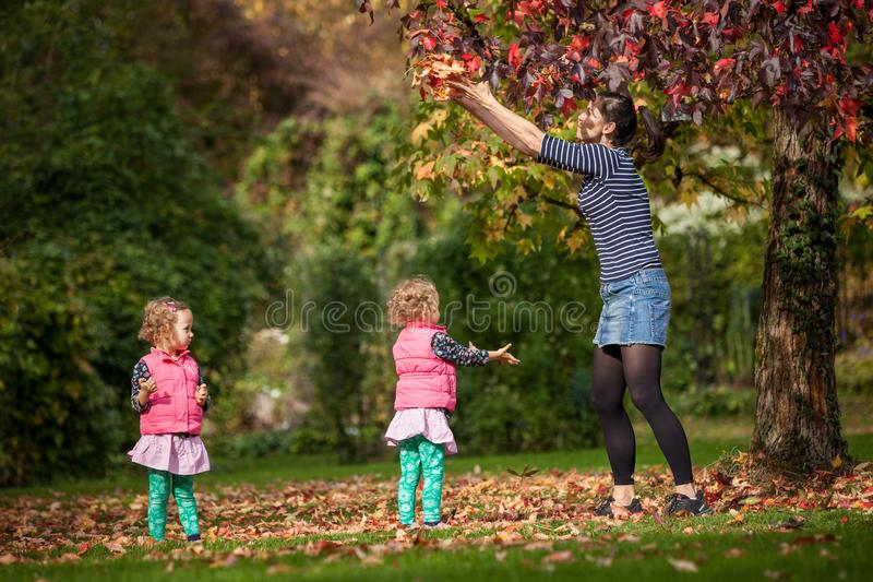 Mother and identical twins having fun under tree with autumn leaves in the park, blond cute curly girls, happy family royalty free stock images