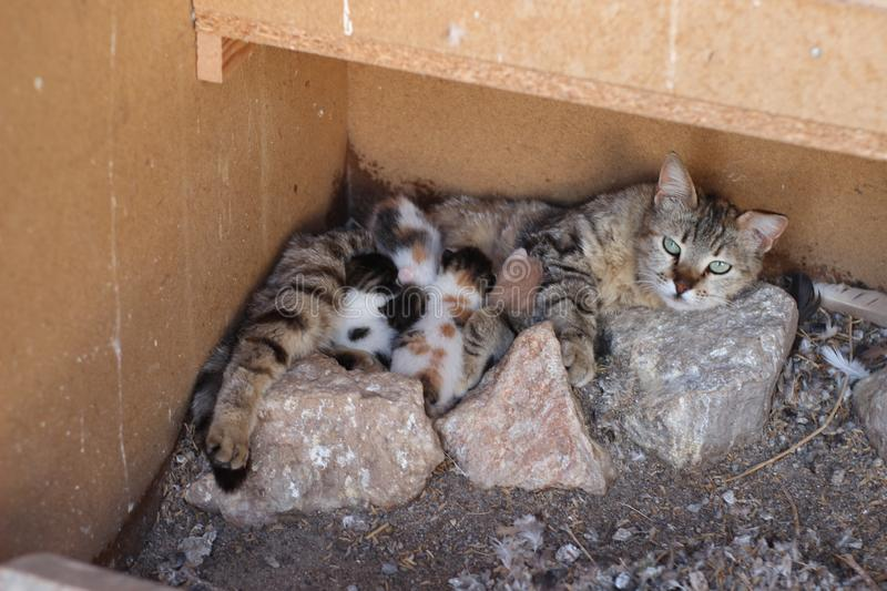 Mother kitten and small cute cats royalty free stock photo