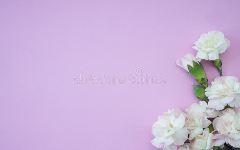Mother' kort för s-daghälsning, härlig rosa nejlika arkivbild