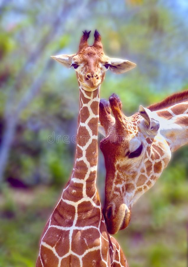 Mother love. stock photography