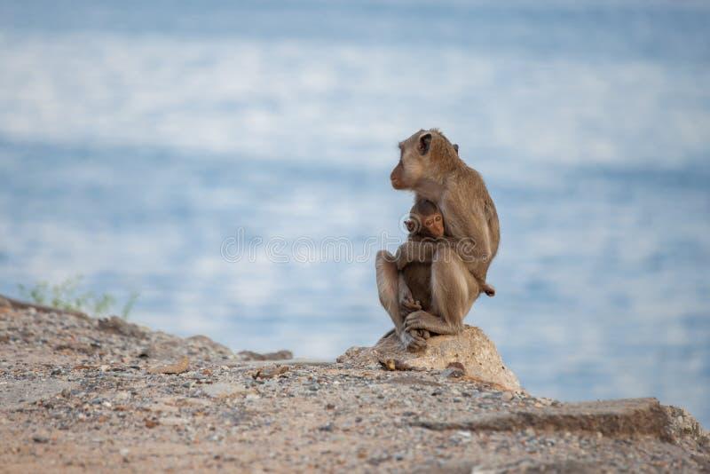 Mother monkey hugging her baby monkey royalty free stock photo