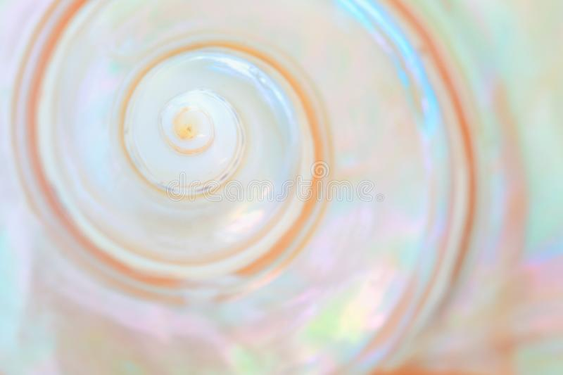 Mother of pearl sea shell close up background royalty free stock image