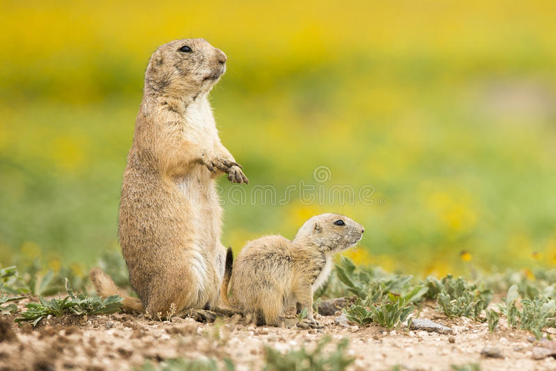 Mother protecting her newborn royalty free stock photo