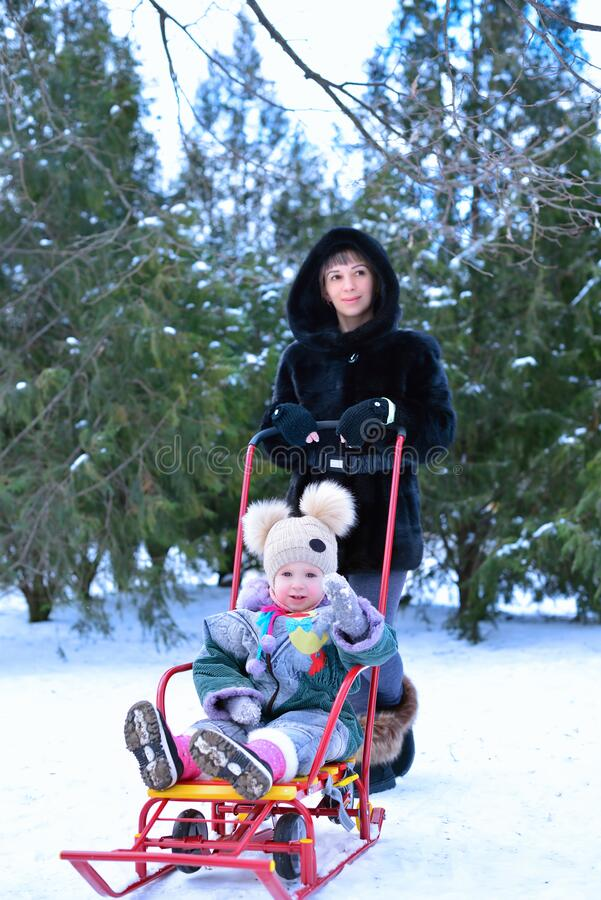 Mother rolls sled with her daughter sitting on it in winter snowy day at nature stock images
