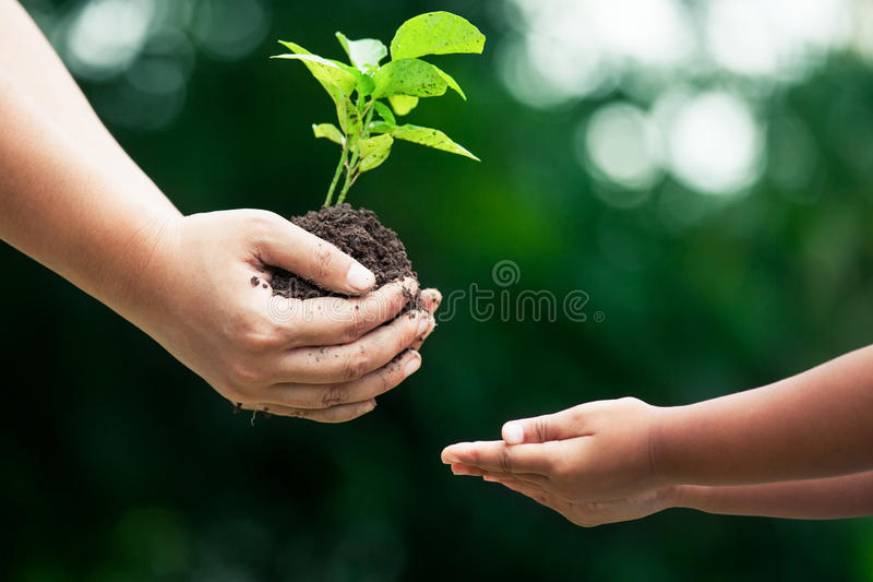 Mother`s hand giving young tree to a child for planting together stock photo