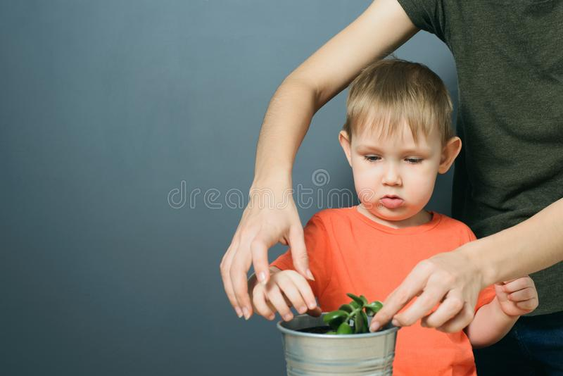 Mother and son planting money tree plant in metal flower pot stock photo