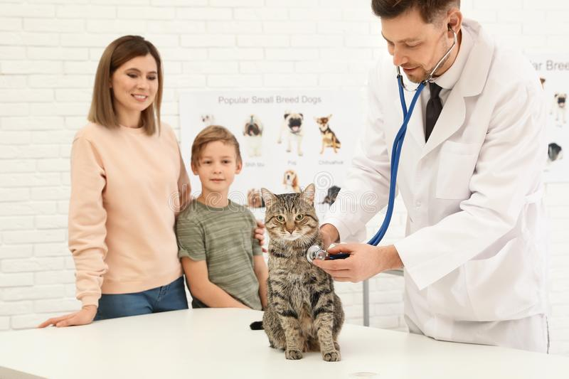 Mother and son with their pet visiting veterinarian. Doc examining cat stock image