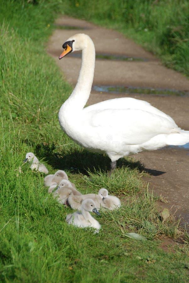 Download Motherhood Stock Photography - Image: 27104622