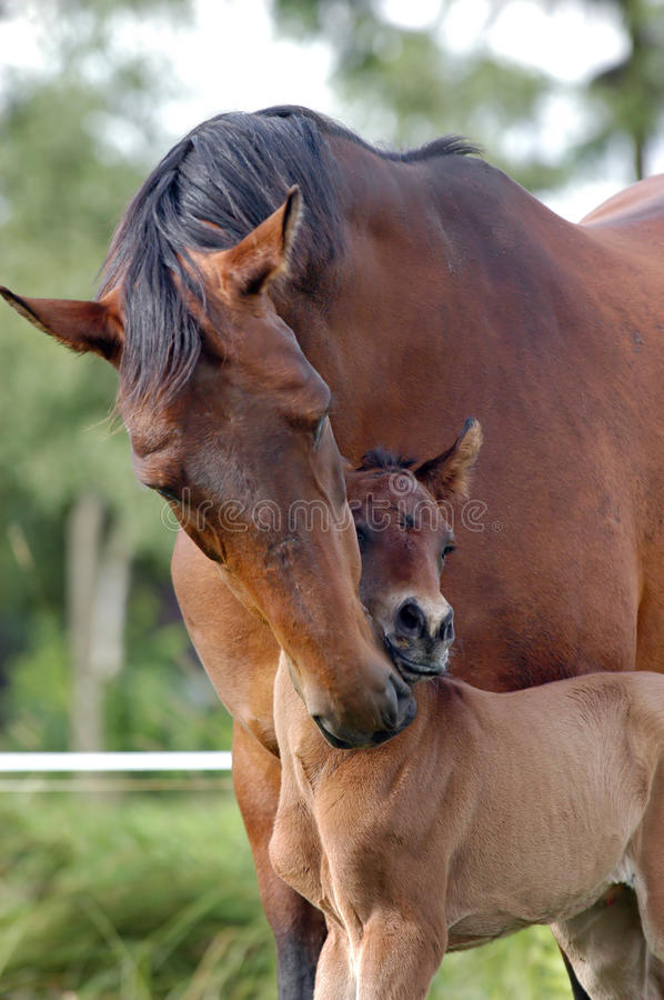 Download Motherly care stock image. Image of welfare, care, horse - 10083399