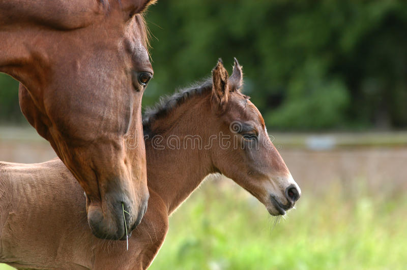 Download Motherly care stock image. Image of welfare, born, warmblooded - 10083463