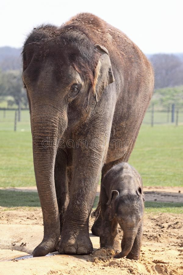 Download Motherly Love stock photo. Image of protect, wildlife - 14072866