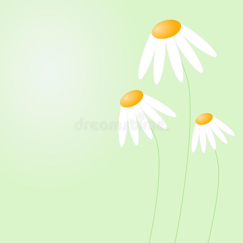 Mothers Day Card White Shy Daisies Royalty Free Stock Images