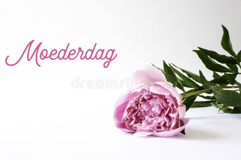 Mothers Day, Moederdag in Dutch. Pink peony, room for copy. stock photography