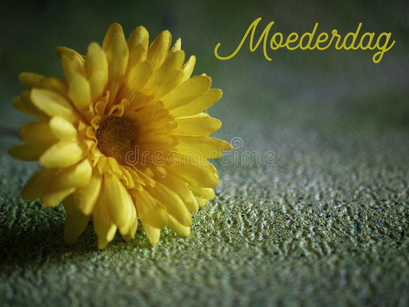 Mothers Day, Moederdag in Dutch. Yellow flower, room for copy. royalty free stock images
