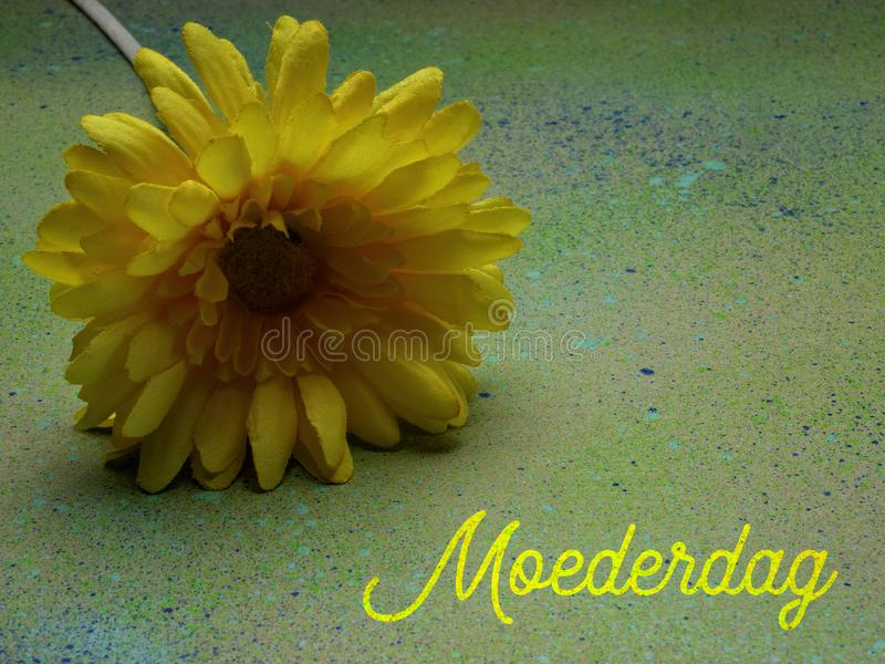 Mothers Day, Moederdag in Dutch. Yellow flower, room for copy. royalty free stock photos