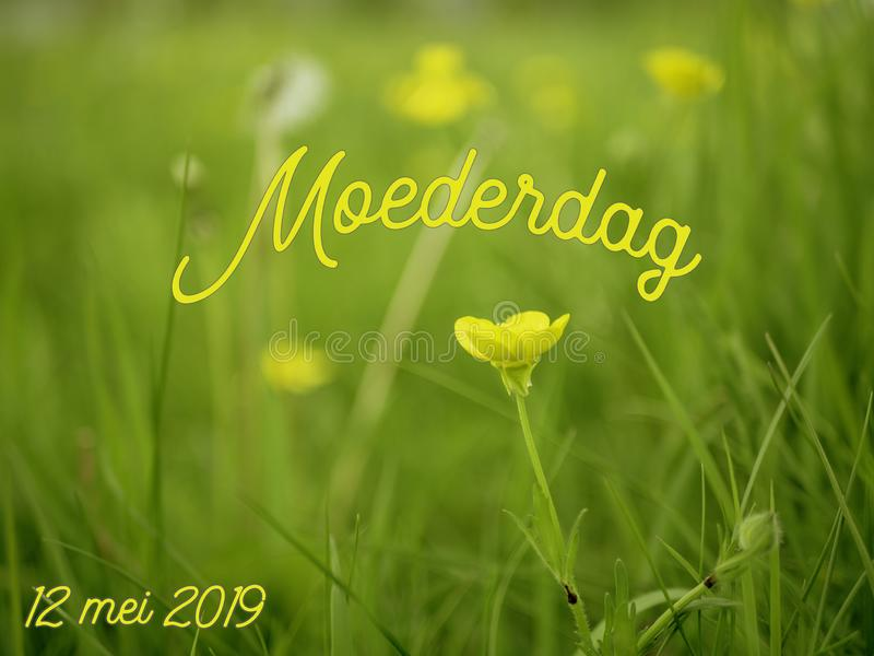 Mothers Day image with the word moederdag in Dutch with yellow flowers stock illustration