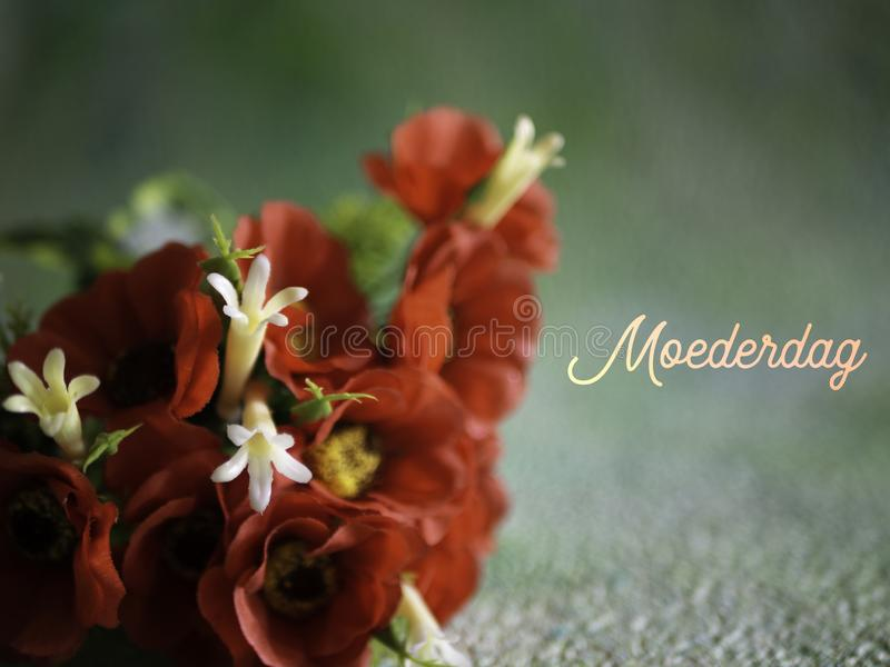Mothers Day, Moederdag in Dutch. Red flowers, room for copy. royalty free stock image