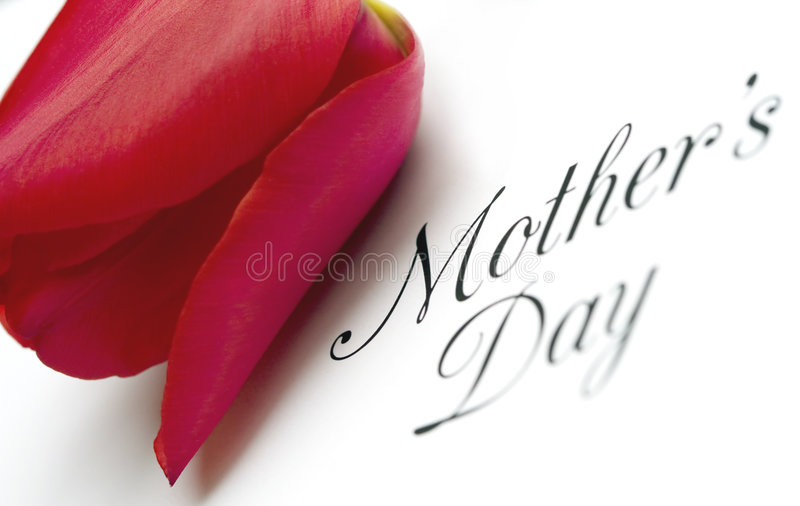 Mothers Day Type with Tulip. Mothers Day dramatic angle black type with red tulip on white background stock images
