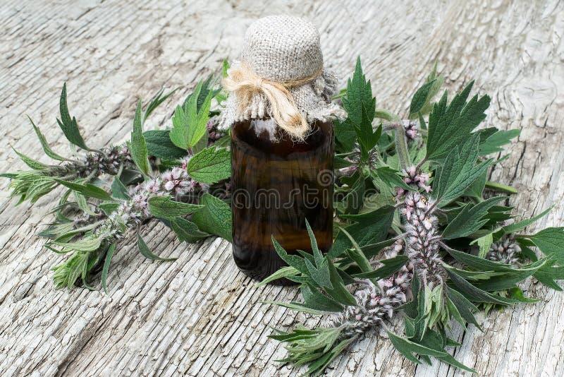 Motherwort (cardiaca del Leonurus) y botella farmacéutica fotos de archivo libres de regalías