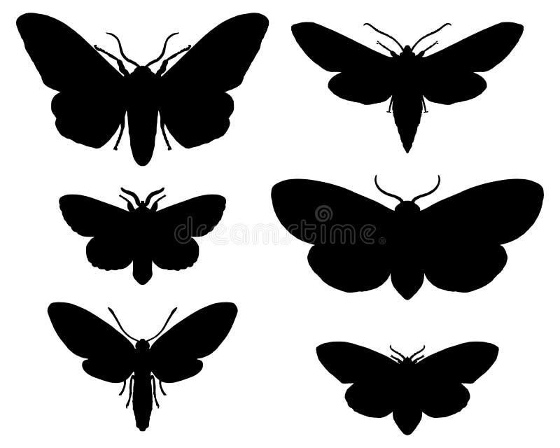 Moths Stock Photos