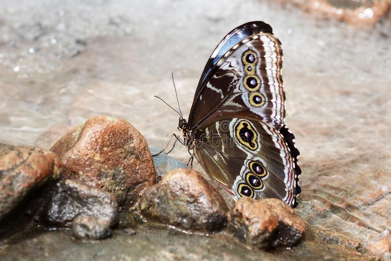 Moths And Butterflies, Butterfly, Insect, Invertebrate