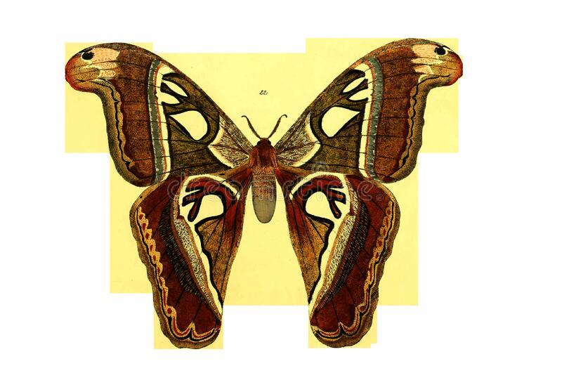 Moths And Butterflies, Butterfly, Insect, Invertebrate royalty free stock image