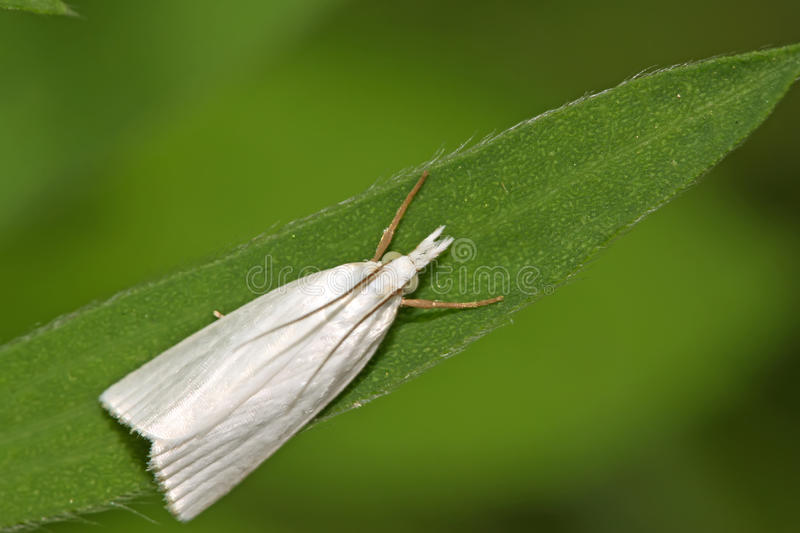 Moths insects. On a green leaf, take photos in the wild natural state royalty free stock image