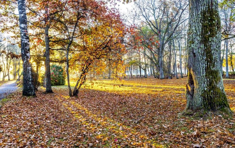 Motif automnal avec le tronc du vieux chêne en vieux parc, l'Europe images stock
