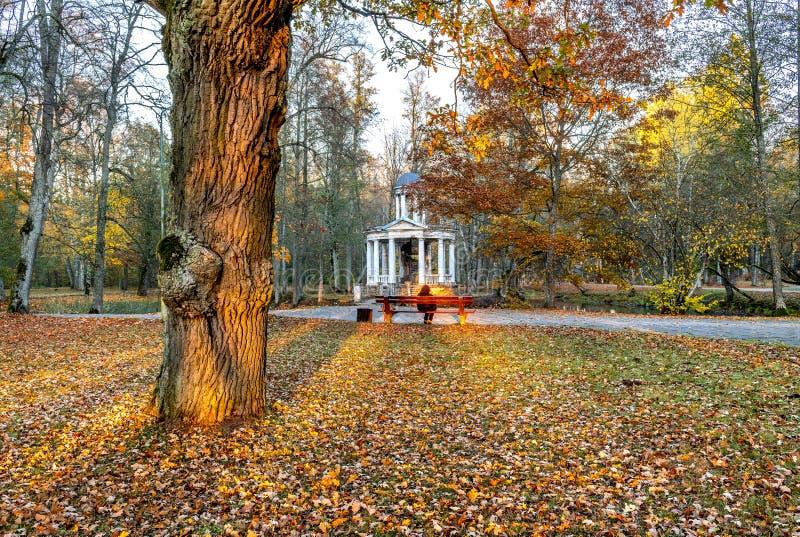 Motif automnal avec le tronc du vieux chêne en vieux parc, l'Europe photo libre de droits