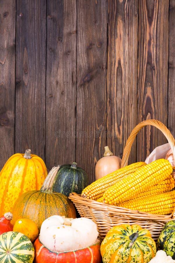 Motif d'Autumn Thanksgiving avec un panier plein avec des épis de maïs et de différents potirons colorés sur un vieux fond en boi image libre de droits
