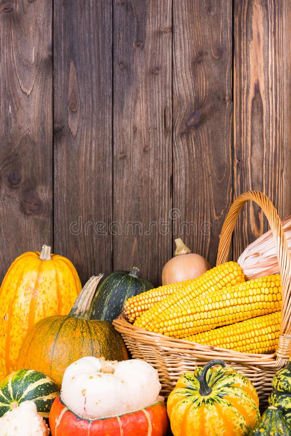 Motif d'Autumn Thanksgiving avec un panier plein avec des épis de maïs et de différents potirons colorés sur un vieux fond en boi images stock