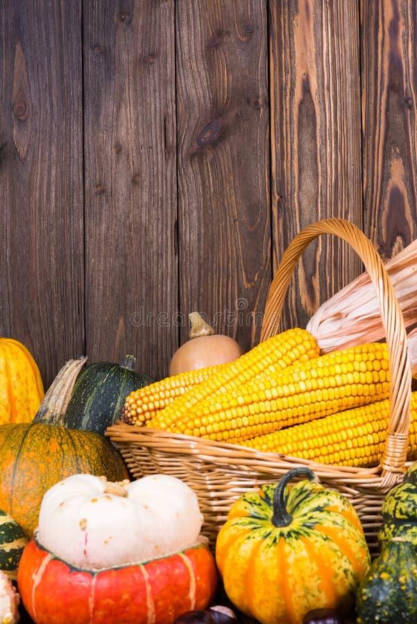 Motif d'Autumn Thanksgiving avec un panier plein avec des épis de maïs et de différents potirons colorés sur un vieux fond en boi images libres de droits