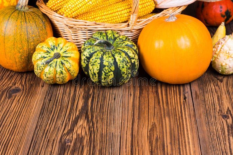 Motif de festival de récolte d'automne avec deux potirons différents de Gorgonzola et d'autres devant un panier avec des épis de  images stock