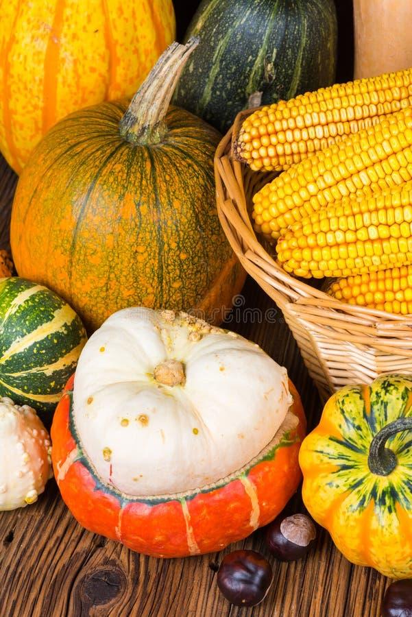 Motif de thanksgiving avec de divers potirons et châtaignes devant un panier avec des épis de maïs photo stock