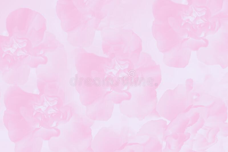 Motif floral de la carnation Arrière-plan rose pâle images stock