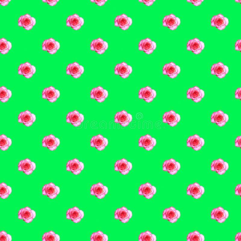 Motif incolore avec bourgeon de rose en fleurs sur fond vert clair Concept isométrique de style moderne image libre de droits