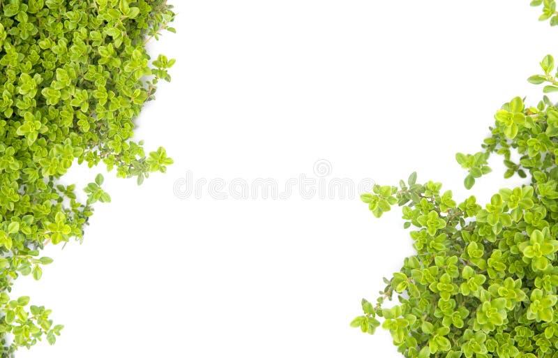 Motif vert de nature images stock