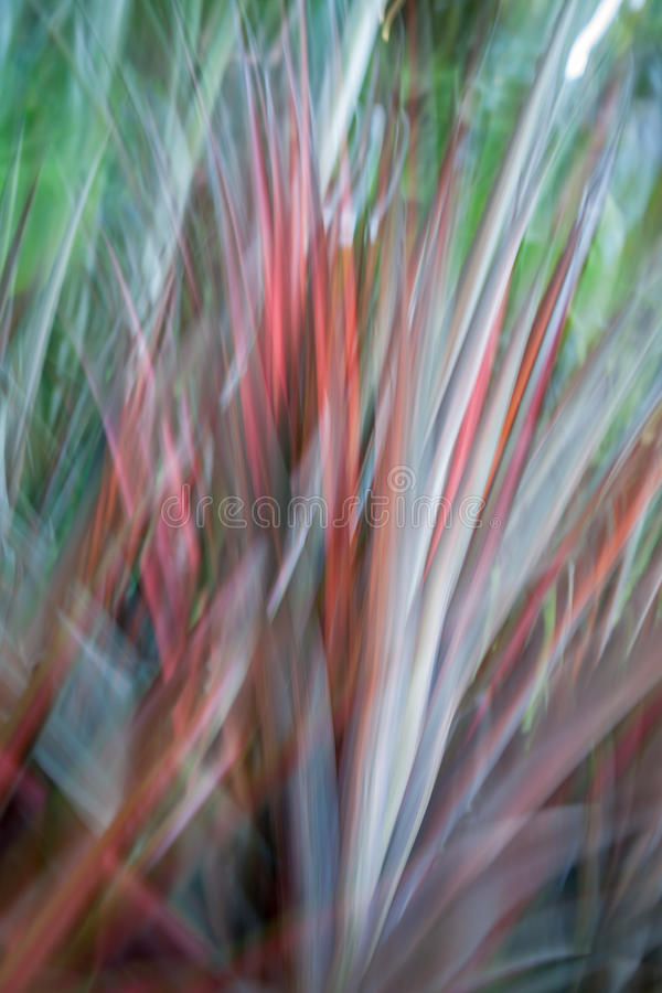 Motion blur abstract in nature. Red and green flax blades stock photos