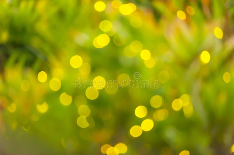 Motion blurred, soft focus on fireflies' flashes in the tropical trees on rainy night, its subspecies of Bang Kachao, Samut stock image
