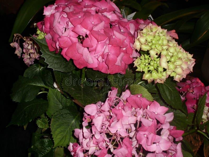 Motiv von Blumen im Rosa und in den gelben Tönen lizenzfreie stockfotos